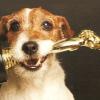 Золотой ошейник или лающий Голливуд